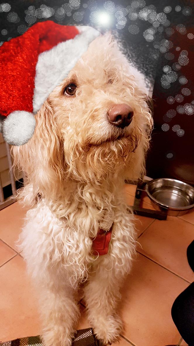 Weihnachten Tierschutzverein Barsinghausen