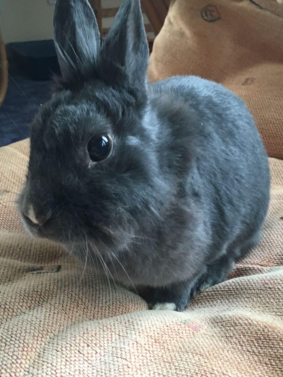 Kaninchen im Tierheim in Barsinghausen sucht einen Paten