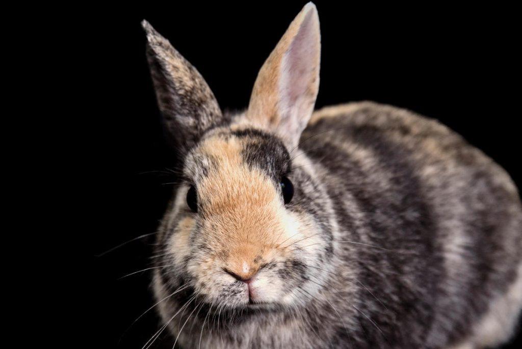 Kaninchen, Meerschweinchen und andere Kleintiere im Tierheim in Barsinghausen