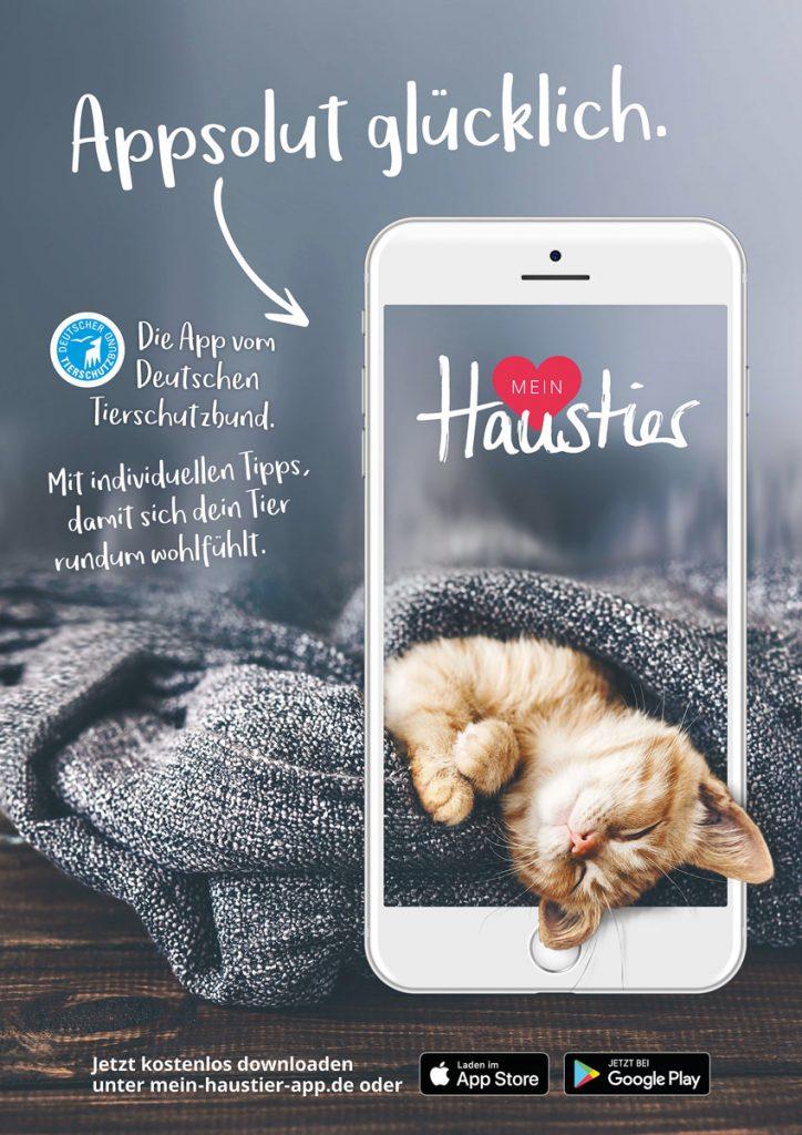App-Motive_Katze