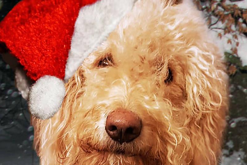 Weihnachten 2018 im Tierheim